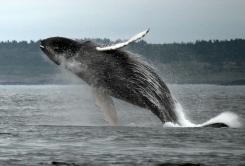 whale-3.jpg