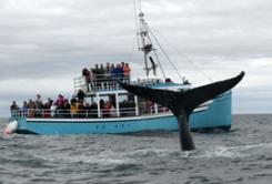 whale-watching-301.jpg