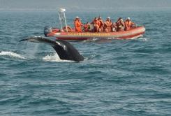 whale-watching-50-1024x685.jpg
