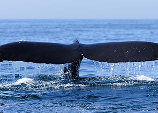 humpback-whale-1320x451